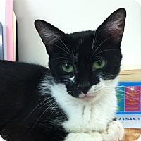 Adopt A Pet :: Grace - Trevose, PA