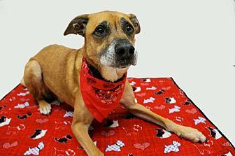 Shepherd (Unknown Type) Mix Dog for adoption in Virginia Beach, Virginia - Gus