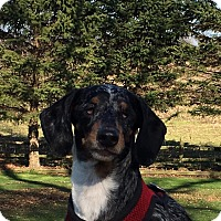 Adopt A Pet :: Mya - Marcellus, MI