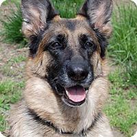 Adopt A Pet :: Crystal - Wayland, MA