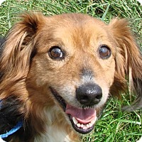 Adopt A Pet :: Ray - Erwin, TN