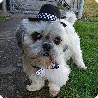Adopt A Pet :: Paw Paw Bones Starr - Fairmont, WV