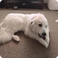 Adopt A Pet :: Dakota ADOPTED - Bloomington, IL
