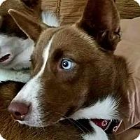 Adopt A Pet :: Mocha - Allison Park, PA