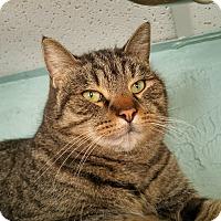 Adopt A Pet :: DANIEL - Haddon Twp., NJ