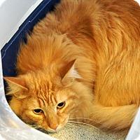 Adopt A Pet :: Dean - Victor, NY
