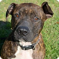 Adopt A Pet :: Biggie - Ridgeland, SC