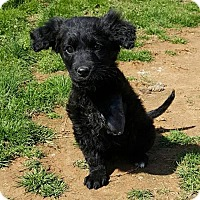 Adopt A Pet :: Soldier - Scottsboro, AL