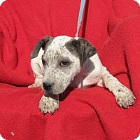 Adopt A Pet :: Krackel - Mountain Home, AR
