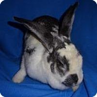 Adopt A Pet :: Lark - Woburn, MA