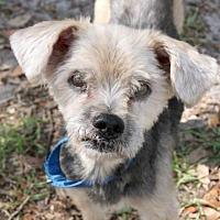Adopt A Pet :: Paco - Loxahatchee, FL