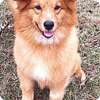 Adopt A Pet :: Glory - New Canaan, CT