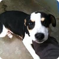 Adopt A Pet :: Duncan - Athens, GA