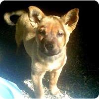 Adopt A Pet :: JENGA - Gilbert, AZ