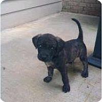 Adopt A Pet :: Austin - Brewster, NY