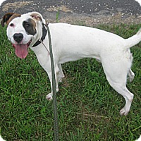 Adopt A Pet :: #253-14  RESCUED! - Zanesville, OH