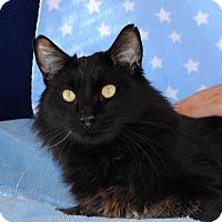 Adopt A Pet :: Houdini - Palmdale, CA