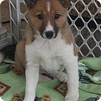Adopt A Pet :: Josie - North Olmsted, OH