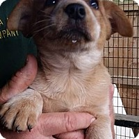 Adopt A Pet :: Klaus - Gainesville, FL