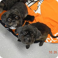 Adopt A Pet :: MITSY AND SASSY SUE - Sandusky, OH