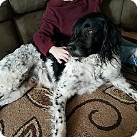 Adopt A Pet :: Jack Sparrow - Lodi, CA