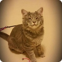 Adopt A Pet :: Pirate George - Grass Valley, CA