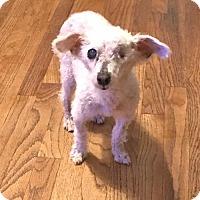 Adopt A Pet :: Harry Paw-Ter - Costa Mesa, CA