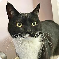 Adopt A Pet :: Vin Diesel - Salisbury, MA