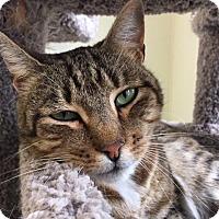 Adopt A Pet :: Mundo - Cumberland, ME