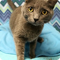 Adopt A Pet :: Baloo - Melbourne, KY