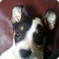 Adopt A Pet :: Jane - Garner, NC