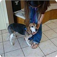 Adopt A Pet :: Sgt. Carter - Phoenix, AZ