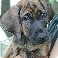 Adopt A Pet :: Stan - South Jersey, NJ