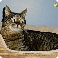 Adopt A Pet :: Mookie - Medway, MA