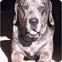 Adopt A Pet :: Mary - Gilbert, AZ