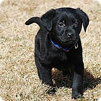 Adopt A Pet :: Alvin - Denver, CO