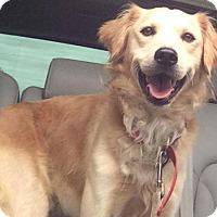 Adopt A Pet :: Stanley - Denver, CO