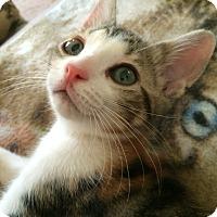 Adopt A Pet :: Cricket - Monroe, GA