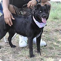 Adopt A Pet :: Mercy - Rockwall, TX