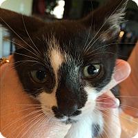 Adopt A Pet :: PANDORA aka SOPHIE - Hamilton, NJ