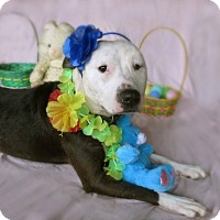 Adopt A Pet :: Pinky - Chattanooga, TN