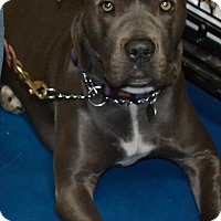 Adopt A Pet :: Juneau - Simi Valley, CA