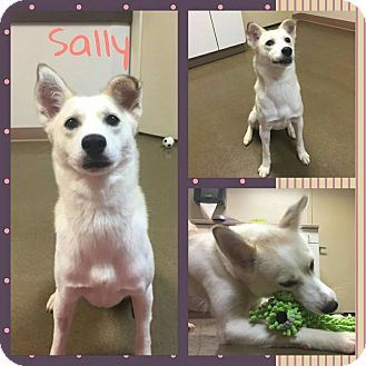 Spitz (Unknown Type, Small) Mix Dog for adoption in Steger, Illinois - Sally