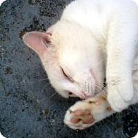 Adopt A Pet :: CASPER GABRIEL - DeLand, FL