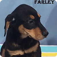 Adopt A Pet :: Farley - East Sparta, OH