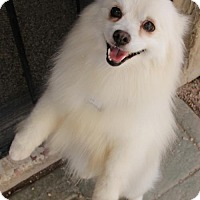 Adopt A Pet :: Nicholas - Phoenix, AZ
