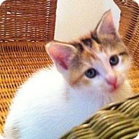 Adopt A Pet :: Koi - Reston, VA
