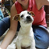 Adopt A Pet :: Leslie (VERY sweet!) - South Jersey, NJ