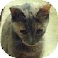 Adopt A Pet :: Demi - Vancouver, BC