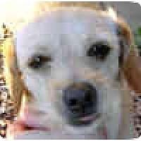 Adopt A Pet :: Roca - Scottsdale, AZ